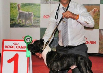 Roberto sureño Kennel 8